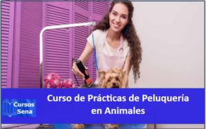 Curso de prácticas de peluquería en animales